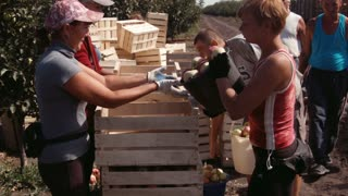 Ukraine, Zaporozhye - SEPTEMBER 10, 2015: People harvest of apples