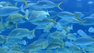 Underwater Bahamas Fish