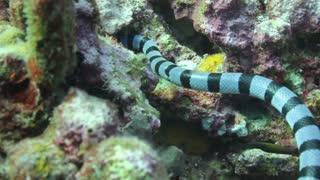 Underwater Snake 2