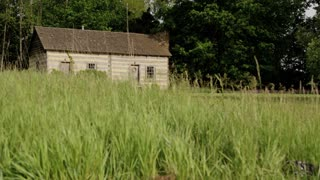 Unkempt Barn Grass