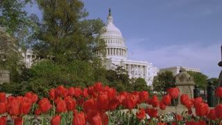 US Capitol Behind Flower Garden