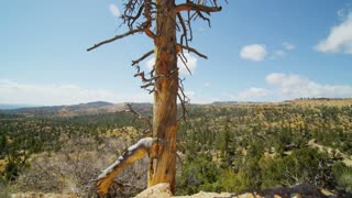 Utah Landscape Past Dead Tree