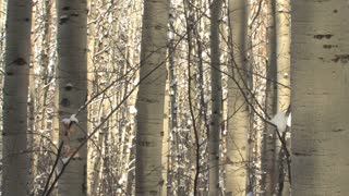 Vail Colorado Snow 48