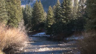 Vail Creek Running Through Forest
