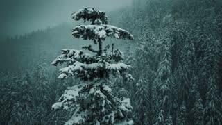 4K Aerial Flying Around Snowy Tree