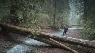 4K Aerial Shot of Woman Walking Across Fallen Redwood