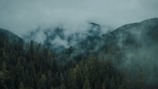 4K Aerial Shot Through Foggy Forest