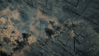 4K UHD Aerial Birds Eye View of Burnt and Charred Forest