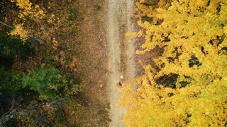 4K UHD Aerial Birds Eye View of Woman Walking Down Dirt Road Through Forest