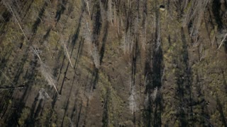 4K UHD Aerial Flying Over Burnt Forest