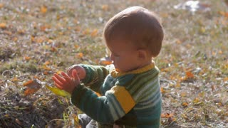 A little 1 year old baby boy sitting on autumn ground park on sunset and playing with yellow leaves. Child smiling and laughting, Slow motion. Adorable child