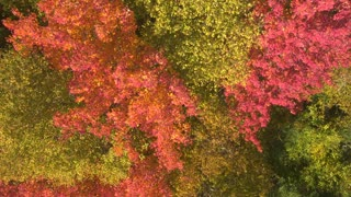 AERIAL, CLOSE UP: Scenic colorful treetops with spectacular fall foliage leaves