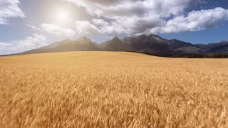 Aerial Drone Close Up Low Flight above ripe yellow wheat field with bright sun and cloudy blue sky in the background. Low Tatras Mountains Range, Slovakia. Summer picturesque landscape. Slowmotion, 4K