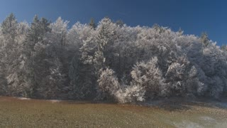 AERIAL: Flying over beautiful white frozen forest treetops in cold sunny winter