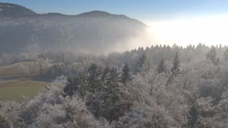 AERIAL Flying over white icy winter trees wrapped in thick morning fog and mist