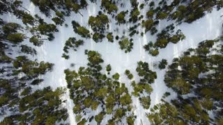 Aerial image from the top of snowy forest. Snowflakes and first snow