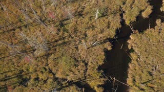 AERIAL Meandering river in gorgeous sunny marshland covered with dead bare trees