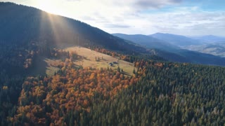Aerial View Drone Flight over beautiful autumn mountain landscape. Green pasture with lonley houses among orange pine tree forest. Mountain range in the background. Carpathians, Ukraine, Europe. 4K
