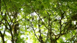 Beautiful 120 Fps Slow Motion Shot Of Leafs And Trees Blowing In The Wind Nature Atmospheric Contemplative Shot