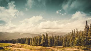 Beautiful autumn postcard landscape. Yellow meadow, pine tree forest and mountains in the background. Exploring world: Carpathians, Ukraine, Europe. Travel, hiking, holidays, recreation Time lapse 4K