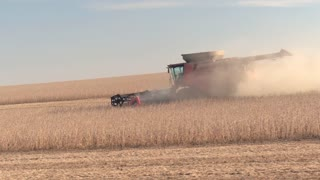 CLOSE UP: Combine harvester on agricultural farm cutting wheat on dusty field