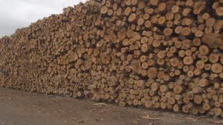CLOSE UP Endless row of perfectly stacked log pile under the cloudy stormy skies
