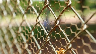Closeup Of Fence With Shallow Depth Of Field
