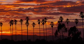 Colorful Sunset Clouds Behind Palm Trees