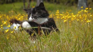 Cute Kitten Playing in Field in Slow Motion