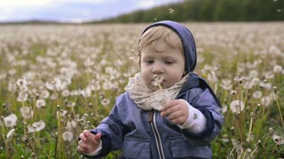 Cute little boy sitting on the ground holding dandelion.