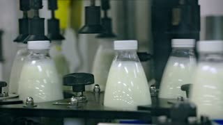 Dairy production line. Milk in bottles on automated conveyor belt at dairy factory. Conveyor line at milk factory. Milk industry. Production dairy products. Food industry. Milk production line