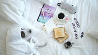 Dog Lying On Bed With Breakfast With Toasts And Coffee