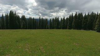 Flying over a field and pine trees to reveal stormy clouds in the mountains
