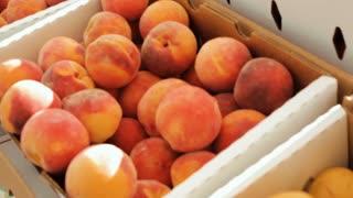 Fresh organic peaches at the local Farmer's Market.