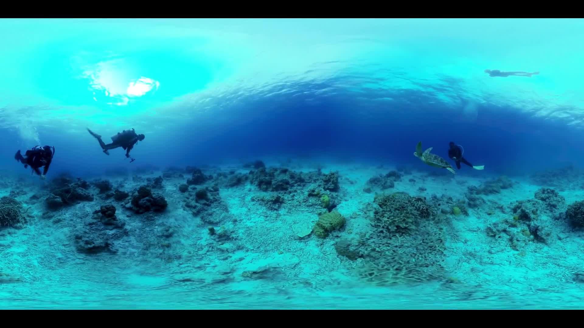 Gili Meno Turtles Underwater 360 VR