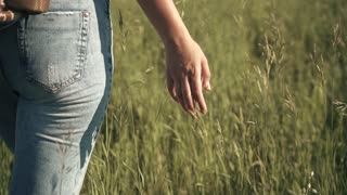 girl traveler goes through the tall grass. young woman traveler touches the grass and enjoy the hike. slow motion