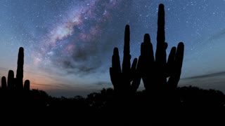hyperlapse of cactuses and Milky Way stars at night