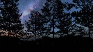 hyperlapse of trees and Milky Way stars at night