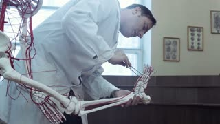 Medical student in anatomy class examining skeleton foot and blood vessels