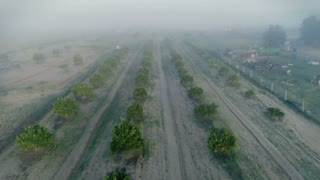 Misty morning epic drone shot over serenity and peaceful calm farm land with fruit orange trees and olive gardens, agricultural industry profits and exploration of nature