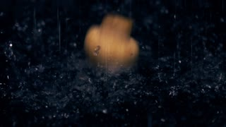 Multiple field mushrooms fall in water against black background. Close-up slow motion video
