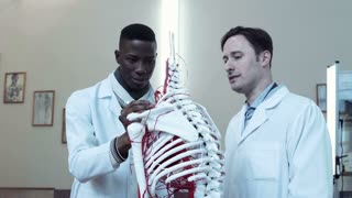 People standing at the skeleton and studying parts. African student showing circulatory system