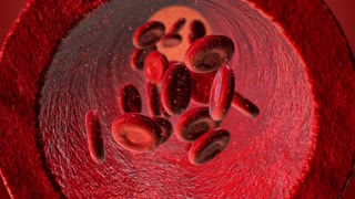 Red blood cells Ferythrocytes lowing through the blood vessel - 4K UHD slow motion animation