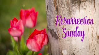 Resurrection Sunday Text Tulips By The Cross