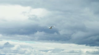 Seagull flying over the wavy sea in the sky