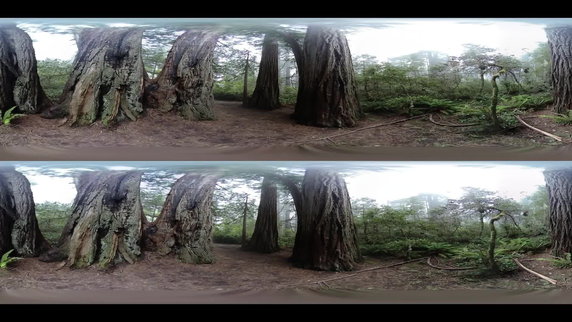 Sequoia National Park Virtual Reality VR 360