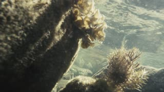 Slow mo seaweed under the water on the stones move from the waves under the rays of the sun