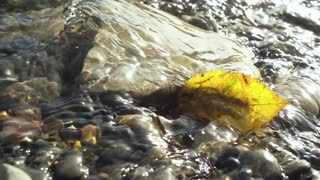 Slow motion yellow autumn leaf in the water flow between the stones at the bottom under the sunlight