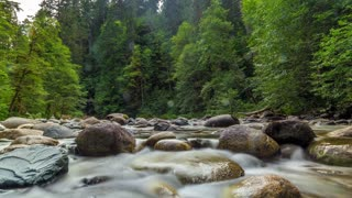 Timelapse River Forest Canada British Colombia