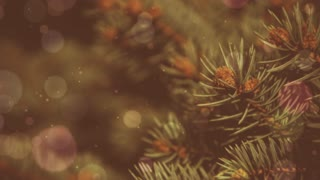 Winter Holidays Evergreen Bokeh Background